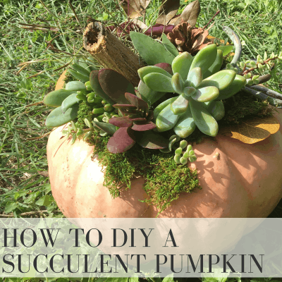 How to Create a Stunning Fall Pumpkin Centerpiece