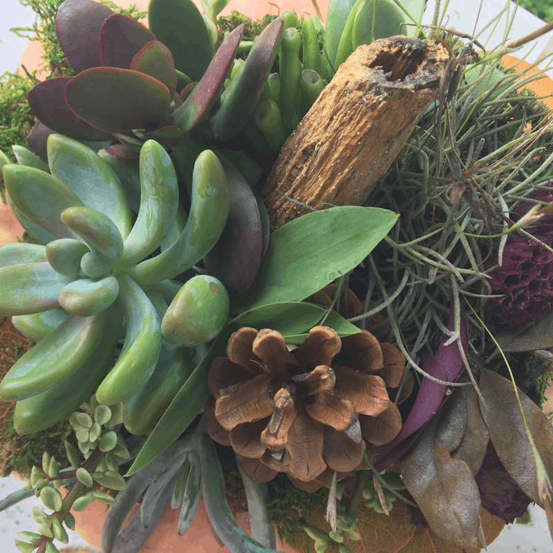 DIY Succulent Pumpkin Close Up for inspiration | Wildflowers and Wanderlust