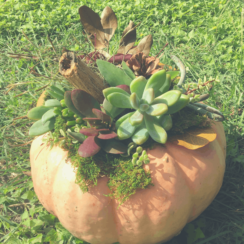 DIY Succulent Pumpkin Inspiration and Instructions | Wildflowers and Wanderlust