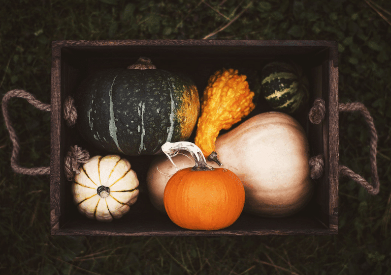 Squash and Pumpkin | Fall Foods for Healthy Skin | Wildflowers and Wanderlust