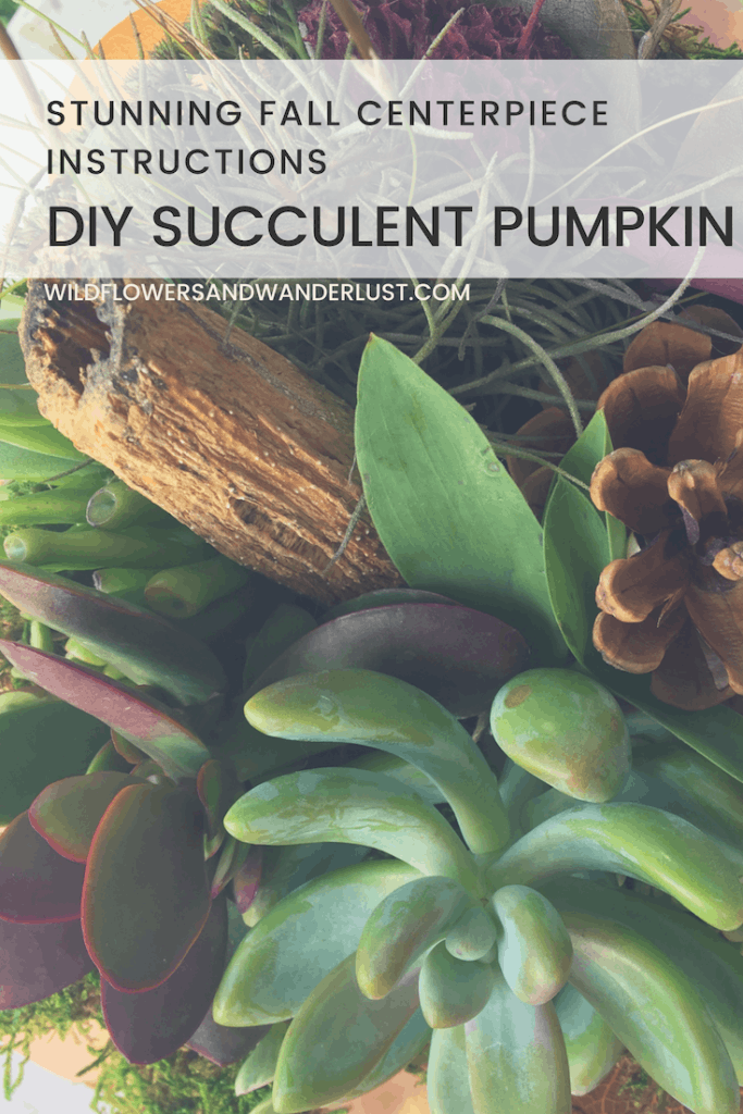 Make your own DIY SUCCULENT PUMPKIN following our easy directions and check out all the beautiful inspiration  | Wildflowers and Wanderlust