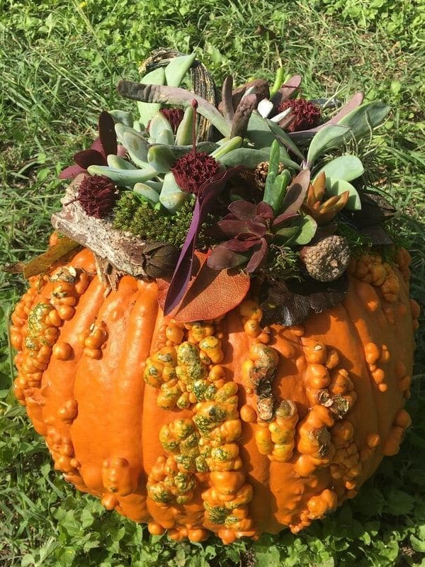 DIY a succulent pumpkin for your fall porch or a table centerpiece  WildflowersAndWanderlust.com