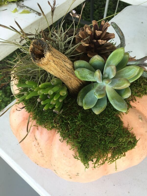 Starting to assemble a DIY succulent pumpkin using a base of moss  WildflowersAndWanderlust.com