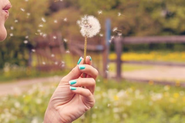 Gratitude Journal Writing Prompts to keep you writing  WildflowersAndWanderlust.com