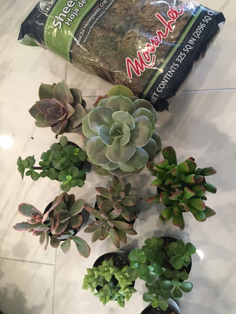 Supplies that you need to make a Succulent Wreath | WildflowersAndWanderlust.com