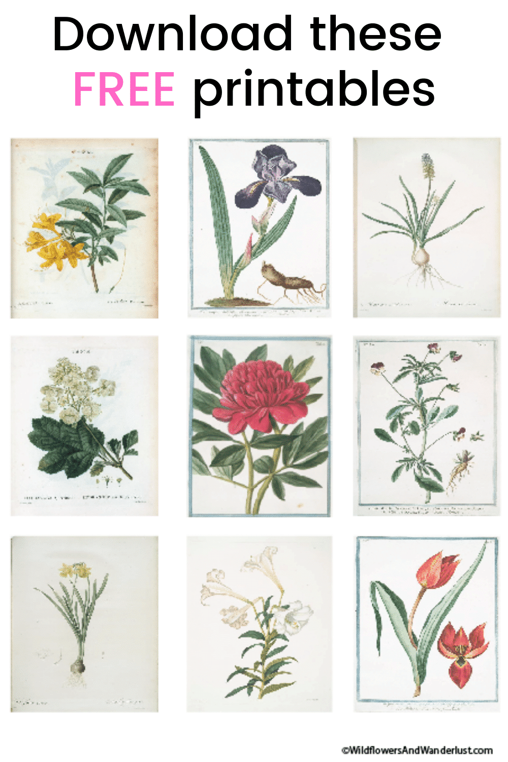 Free Botanical Printables for Spring by WildflowersAndWanderlust.com
