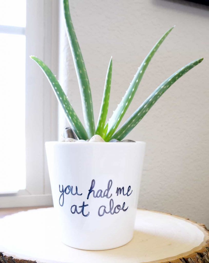 Hand paint terra cotta pots with punny sayings - and even add in a little plant for a craft that you can DIY and sell for profit WildflowersAndWanderlust.com